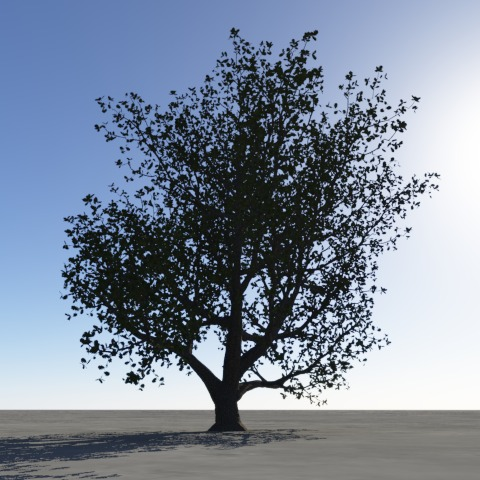 Oak without translucency.jpg