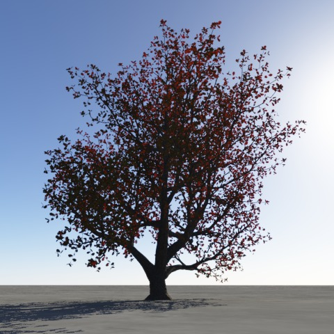 Oak with translucency red.jpg